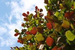 Ramitas pardas con las hojas de varios colores imagen de archivo libre de regalías