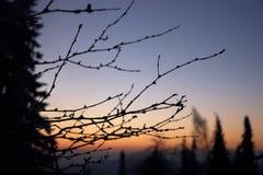 Ramitas y árboles por mañana Fotos de archivo libres de regalías