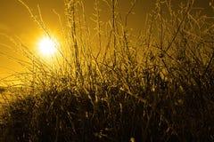 Ramitas y ramificaciones heladas en puesta del sol anaranjada Imagenes de archivo