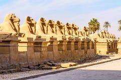 Rammen in de tempel Karnak in Luxor, Egypte royalty-vrije stock fotografie
