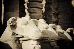 Rammen Sie vorangegangene Sphinxskulpturen, Karnak, Ägypten., Karn Lizenzfreie Stockfotografie