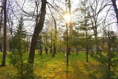 Ramnicu Valcea, Roumanie 02 04 2019 - Le beau parc de Zavoi dans un jour ensoleill? de ressort image libre de droits