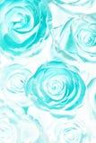 Ramo ácido de las rosas Extracto fotos de archivo