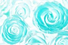 Ramo ácido de las rosas Extracto fotografía de archivo