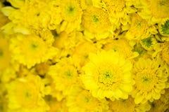 Ramo amarillo de la flor Imagen de archivo libre de regalías