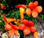 Ramo anaranjado de la flor con la abeja Fotografía de archivo