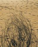 Ramo asciutto con le orme nella sabbia nei precedenti fotografia stock