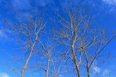 Ramo asciutto dell'albero Fotografia Stock