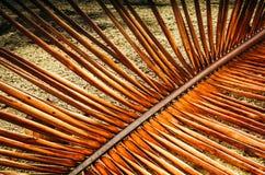Ramo asciutto della palma sulla sabbia Fotografia Stock Libera da Diritti