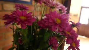 Ramo Astra en un florero en el cuarto almacen de video