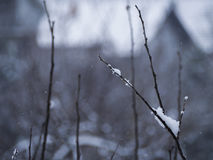 Ramo belamente coberto de neve Fotografia de Stock