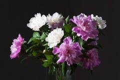 Ramo blanco y rosado de las peonías Foto de archivo