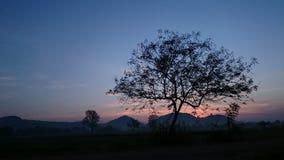 Ramo bonito da árvore Imagens de Stock
