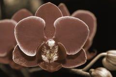 Ramo bonito da orquídea no fundo borrado sumário Imagens de Stock Royalty Free