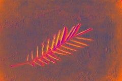 Ramo bonito da palma da árvore com folhas pequenas e teste padrão da sombra no fundo de néon coral do duotone do rosa vermelho Ef ilustração royalty free