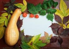 Ramo branco do physalis do fundo da abóbora de outono da ação de graças e Foto de Stock Royalty Free