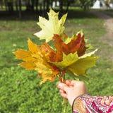 Ramo brillante del otoño foto de archivo