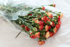 Ramo brillante hermoso de claveles Imagenes de archivo