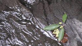 Ramo caído do ork do pino video estoque