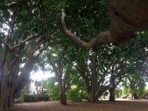 Ramo che porta negli alberi Fotografie Stock Libere da Diritti