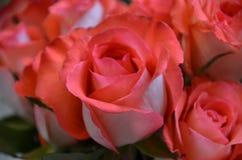 ramo color de rosa Fotos de archivo