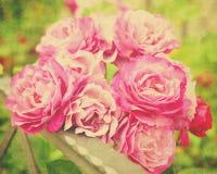 ramo color de rosa Imagen de archivo