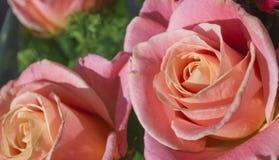 Ramo color de rosa de la tarjeta del día de San Valentín hermosa Imagen de archivo