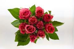 Ramo color de rosa del rojo Fotografía de archivo libre de regalías