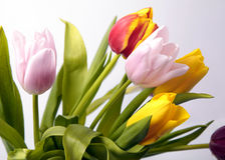 Ramo colorido de flores frescas del tulipán del resorte Imágenes de archivo libres de regalías