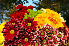 Ramo colorido de las flores Fotografía de archivo