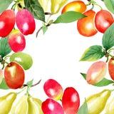 Ramo com as bagas do mas do cornus folha verde Grupo da ilustração do fundo da aquarela Quadro redondo ilustração do vetor
