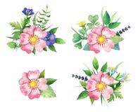Ramo con la perro-rosa, las flores salvajes y las vidas verdes Ilustración del Vector