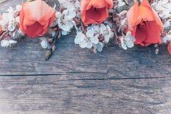 Ramo con las flores blancas del albaricoque y los tulipanes rojos en el fondo de viejos, de madera tableros Lugar para el texto fotos de archivo libres de regalías