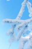 Ramo congelado Foto de Stock Royalty Free
