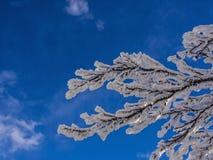 Ramo congelado contra o céu azul Fotografia de Stock Royalty Free