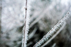 Ramo congelato con le punte del ghiaccio Immagini Stock Libere da Diritti