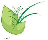 Ramo culinario de las hierbas stock de ilustración