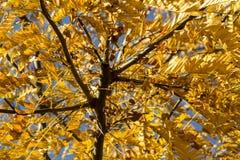 Ramo da árvore Foto de Stock Royalty Free