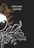 Ramo da árvore de café com folhas, flores e feijões de café Molde botânico Foto de Stock
