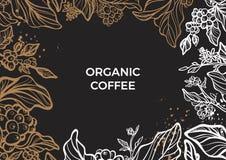 Ramo da árvore de café com folhas, flores e feijões de café Molde do vetor Fotografia de Stock Royalty Free