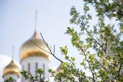 Ramo da árvore de maçã e da igreja de Ortodox no fundo, foco macio fotografia de stock