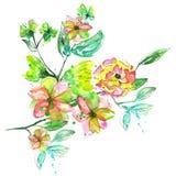 Ramo da aquarela com com as flores e as folhas cor-de-rosa, amarelas e verdes do verde Imagem de Stock Royalty Free