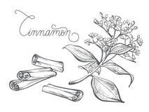 Ramo da canela, folha, flor, casca Imagem de Stock Royalty Free