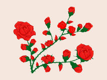 Ramo da flor de Rosa com botões Fotos de Stock