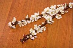 Ramo da flor do abricó imagens de stock