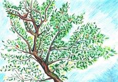 Ramo da folha da árvore da aquarela no fundo do céu Foto de Stock Royalty Free