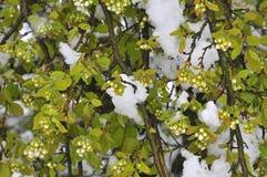 Ramo da imagem da árvore na neve imagem de stock royalty free