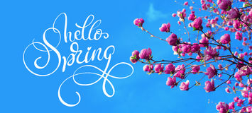Ramo da mola de flores do rosa da magnólia da mola da maçã e do texto olá! Rotulação da caligrafia fotografia de stock