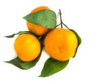 Ramo da tangerina madura alaranjada com folhas verdes imagem de stock