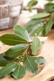 Ramo das folhas de louro do louro em uma placa de madeira Fotografia de Stock Royalty Free